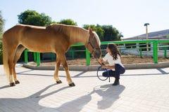 Giovane donna attraente che governa un cavallo al Immagine Stock