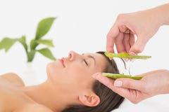 Giovane donna attraente che riceve massaggio di vera dell'aloe al centro della stazione termale Immagine Stock