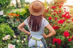 Giovane donna che ammira il suo giardino di estate Giardiniere in grembiule e cappello che esamina i fiori fotografie stock libere da diritti