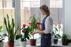 Giovane donna che coltiva le piante domestiche Fotografia Stock Libera da Diritti