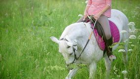 Giovane donna che galoppa sul cavallo attraverso il prato alla sera di estate video d archivio