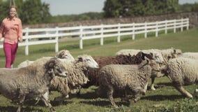 Giovane donna che gioca con le pecore al ranch archivi video
