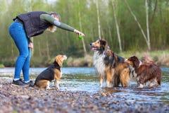 Giovane donna che gioca con tre cani ad un fiume Fotografia Stock Libera da Diritti