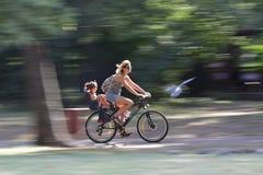 Giovane donna che guida una bici nel parco Immagini Stock Libere da Diritti