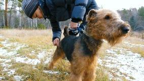 Giovane donna che pettina una razza Airedale del cane sulla natura video d archivio