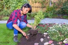 Giovane donna che pianta la pianta del basilico nel suolo del giardino Immagine Stock