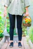 Giovane donna con il canestro di pianta e delle verdure nella serra Tempo di raccolta Immagine Stock