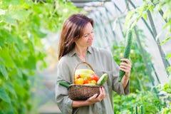 Giovane donna con il canestro di pianta e delle verdure nella serra Tempo di raccolta Immagine Stock Libera da Diritti