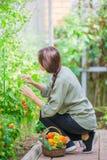 Giovane donna con il canestro di pianta e delle verdure nella serra Tempo di raccolta Fotografie Stock