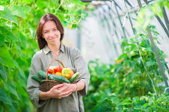 Giovane donna con il canestro di pianta e delle verdure nella serra Tempo di raccolta Fotografia Stock Libera da Diritti