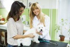 Giovane donna con un cane al veterinario immagine stock