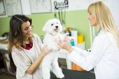 Giovane donna con un cane al veterinario fotografie stock
