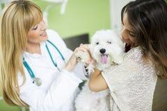 Giovane donna con un cane al veterinario immagine stock libera da diritti