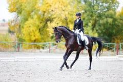 Giovane donna del cavaliere sul cavallo sulla concorrenza di dressage Fotografia Stock