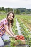 Giovane donna dell'agricoltore nel giacimento della fragola Fotografie Stock