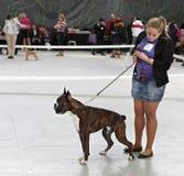 Giovane donna ed il suo cane Immagine Stock