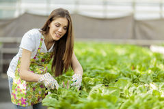Giovane donna in giardino floreale Fotografia Stock Libera da Diritti