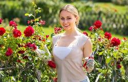 Giovane donna sveglia che lavora con le rose del cespuglio con lo strumento orticolo immagini stock