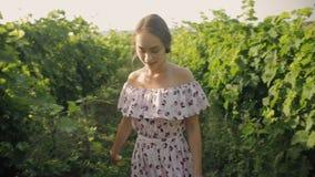 Giovane donna tenera che cammina lungo le file della vigna archivi video