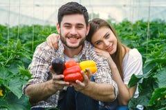 Giovane e bello, agricoltori che tengono le verdure Fotografia Stock