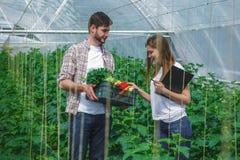 Giovane e ragazza che esaminano una scatola delle verdure Immagini Stock Libere da Diritti