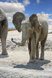 Giovane elefante africano all'aperto Fotografie Stock
