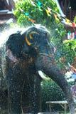 Giovane elefante che spruzza acqua Immagini Stock Libere da Diritti