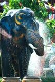 Giovane elefante che spruzza acqua Immagine Stock