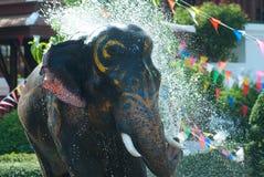 Giovane elefante che spruzza acqua Fotografia Stock Libera da Diritti