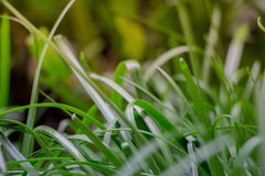 Giovane erba di Tranuil che viene su dal pavimento e dal receivin della giungla Fotografia Stock Libera da Diritti