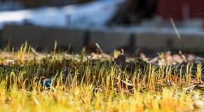 Giovane erba in primavera di un giorno soleggiato fotografia stock libera da diritti