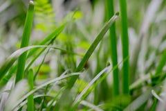 Giovane erba in primavera in un colpo vago ad un giardino tropicale Immagine Stock Libera da Diritti