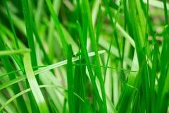 Giovane erba in primavera in un colpo vago ad un giardino tropicale Fotografie Stock
