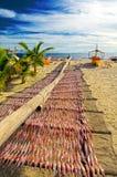 Giovane essiccazione del calamaro nelle Filippine Fotografia Stock