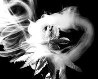 Giovane fiore della cannabis in un anello del fumo fotografie stock libere da diritti