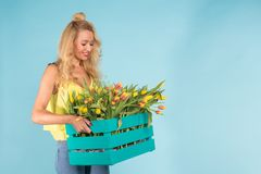 Giovane fiorista biondo allegro della donna con la scatola dei tulipani sopra fondo blu con lo spazio della copia immagini stock