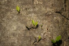 Giovane foglia di crescita dell'albero dal lato di grande albero immagini stock libere da diritti