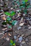 Giovane fondo dell'albero fotografia stock