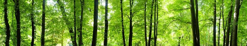 Giovane foresta Fotografie Stock