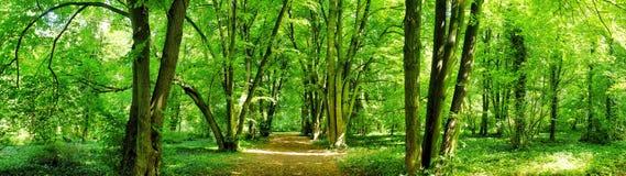 Giovane foresta Fotografia Stock