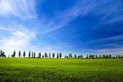 Giovane frumento autunnale sulla priorità bassa del cielo blu Immagine Stock
