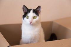 Giovane gattino Fotografie Stock