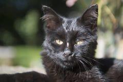 Giovane gattino all'aperto al sole Fotografia Stock