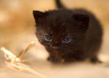 Giovane gattino nero con paglia fotografie stock