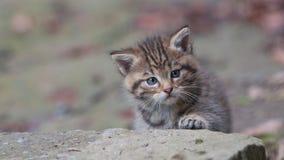 Giovane gattino selvaggio Fotografie Stock Libere da Diritti