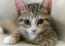 Giovane gattino sveglio Immagine Stock Libera da Diritti