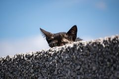 Giovane gattino sveglio del soriano che dà una occhiata da dietro una parete fotografie stock