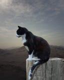 Giovane gatto che si siede su un pezzo di vecchio legno fotografia stock libera da diritti
