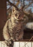 Giovane gatto che si siede sulla superficie di legno fotografia stock