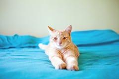 Giovane gatto divertente immagine stock